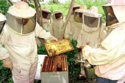 apiculturabutanta1393947910