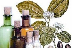 farmacias-de-homeopatia-butanta