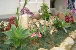 Aquavida Aquarismo e Jardinagem