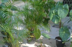 plantasornamentaisbutanta1394212697